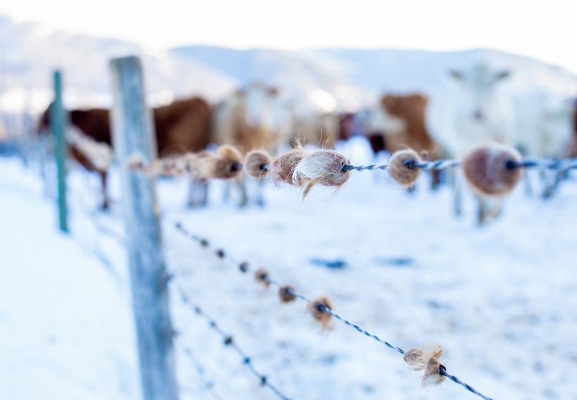 winterfarm-8