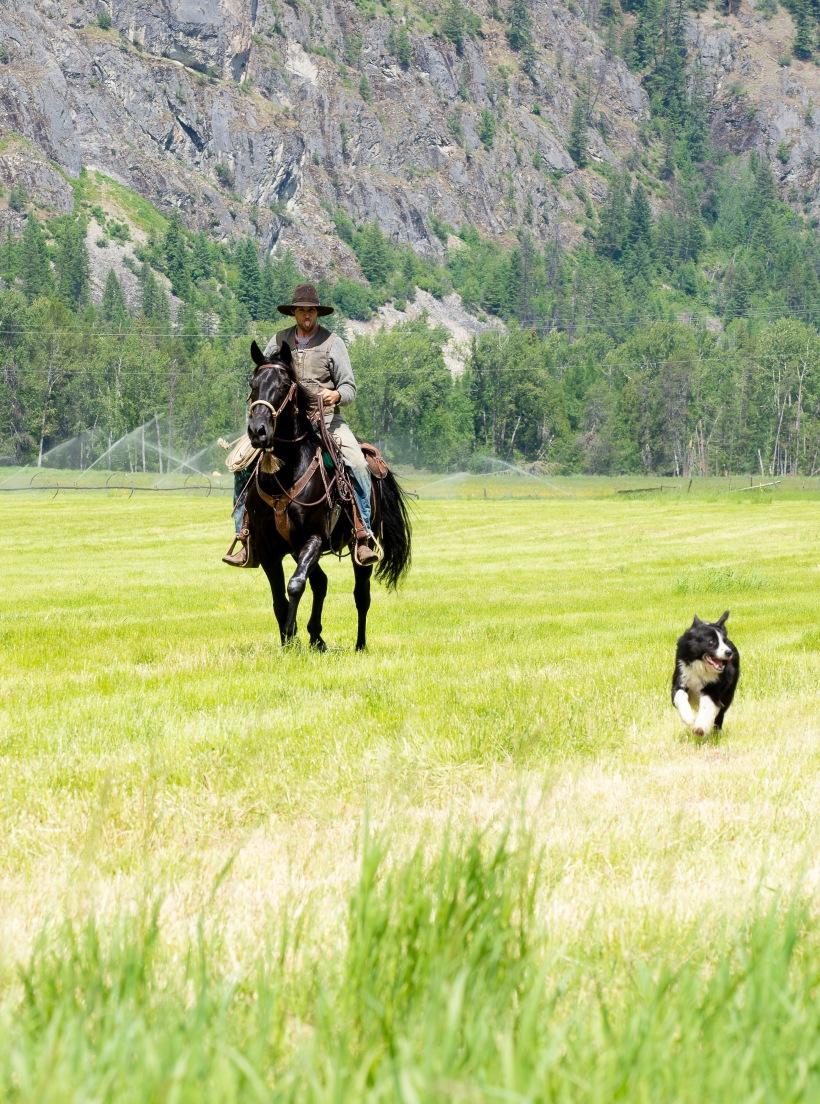 cattled-12