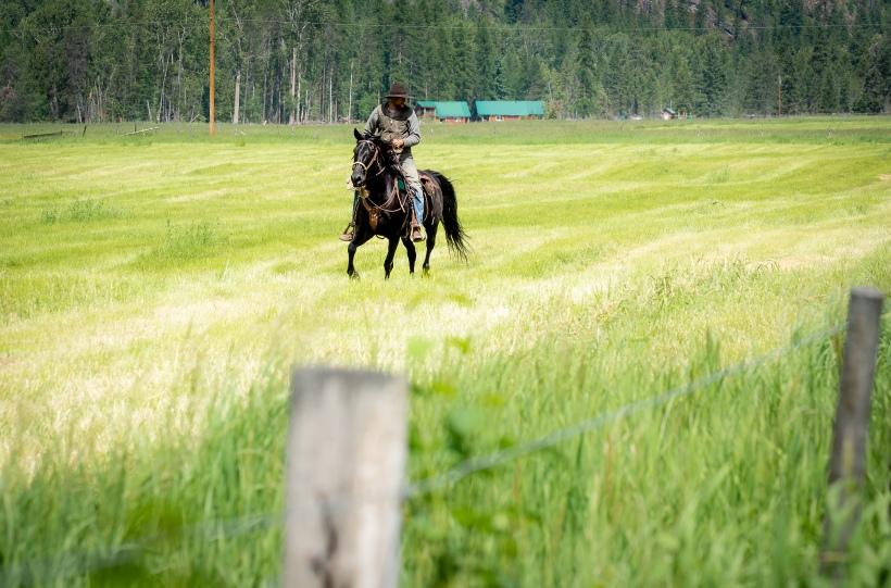 cattled-3